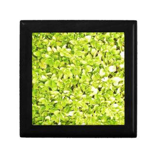 natürliches grünes Blatt verlässt Baum-Erde schöne Geschenkbox