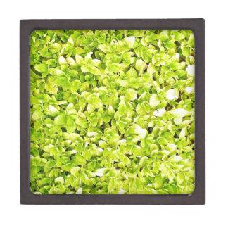 natürliches grünes Blatt verlässt Baum-Erde schöne Kiste