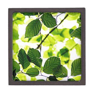 natürliches grünes Blatt verlässt Baum-Erde schöne Schmuckkiste