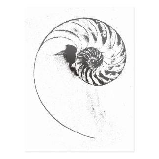 Nautilus-Muschel 1 Postkarte