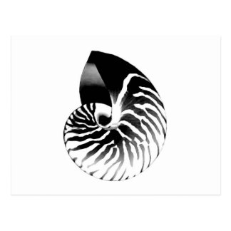Nautilus-Muschel - Schwarzes, Grau und Weiß Postkarte
