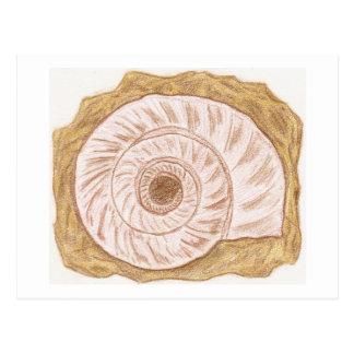 Nautilus Postkarte