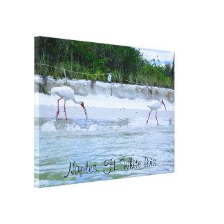 Neapel, weiße IBIS Vögel FLs, die auf Strand gehen Leinwanddruck