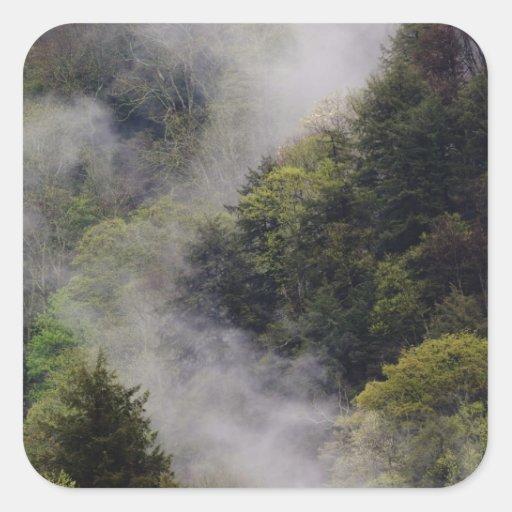 Nebel, der vom Bergabhang nach Frühlingsregen stei Quadratsticker