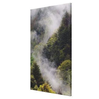 Nebel, der vom Bergabhang nach Frühlingsregen stei Gespannte Galeriedrucke