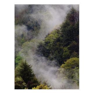 Nebel, der vom Bergabhang nach Frühlingsregen stei Postkarte