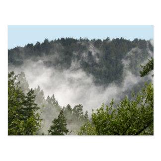 Nebel-Steigen Postkarten