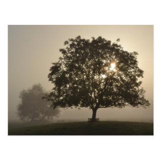 Nebelhafte Bäume Postkarte