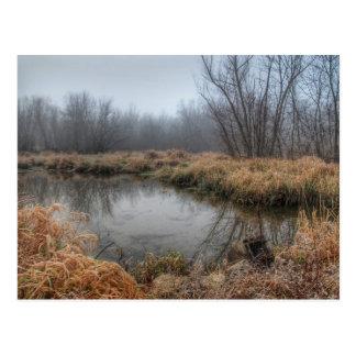 Nebeliger Morgen an einem Sumpf Postkarte