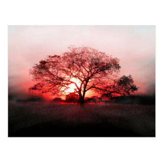 Nebeliger Sonnenuntergang hinter einem Baum Postkarten