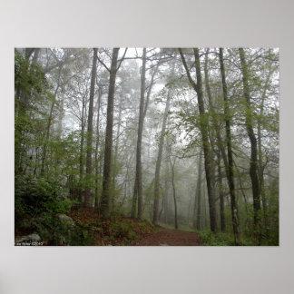 Nebeliges Hinterim Früjahr Waldplakat Poster