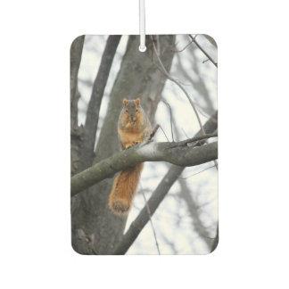Nebeliges Morgen-Eichhörnchen Lufterfrischer