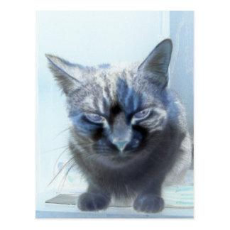 Negative Miezekatze-Katze Postkarte