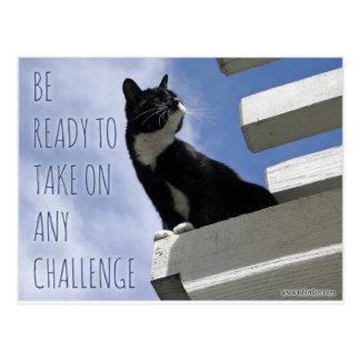 Nehmen auf irgendeiner motivierend Katze der Postkarte