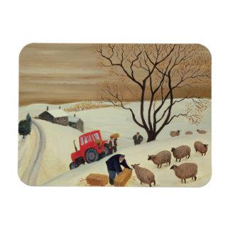 Nehmen den Schafen des Heus durch Traktor Magnete