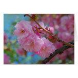 Nehmen Sie Rosa-Kirschblüten des tiefen Atems Grußkarte