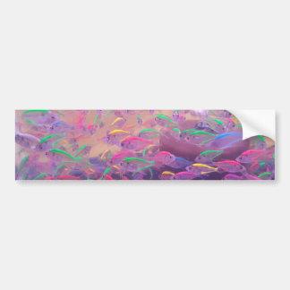 Neonfische in einem Aquarium Autoaufkleber