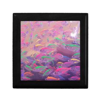 Neonfische in einem Aquarium Erinnerungskiste
