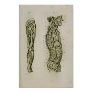 Nervöses Systems-Körper-Bein-Vintager Poster