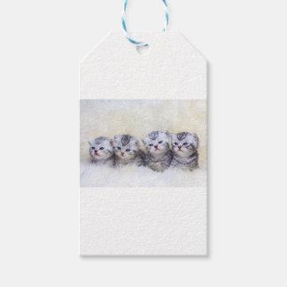Nest mit vier jungen Tabbykatzen in Folge Geschenkanhänger