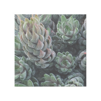 "Netter Kaktus 12"""" Verpackung der Galerie-X12 Galerieleinwand"