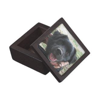 Netter schwarzer Labrador-Welpe tut Kamera-Pose Schachtel