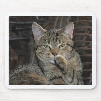 Nettes Miezekatze-Katzen-Denken Mousepads