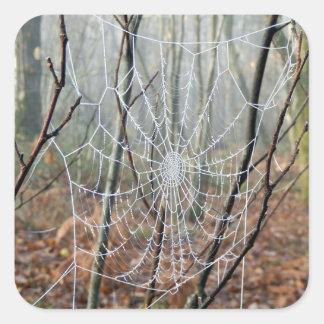 Netz des europäischen Garten-Spinnen-Aufklebers Quadratischer Aufkleber