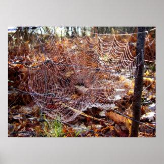 Netz des europäischen Garten-Spinnen-Plakats Poster