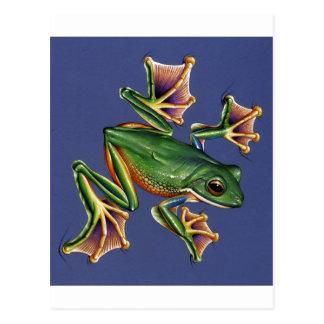 Netz-Frosch Postkarte