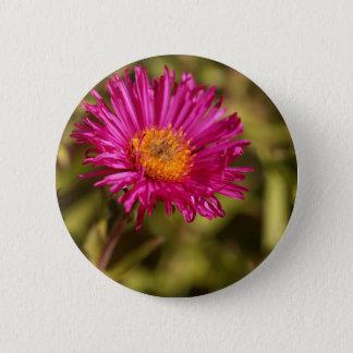 Neu-England Aster (Symphyotrichum Novas angliae) Runder Button 5,7 Cm