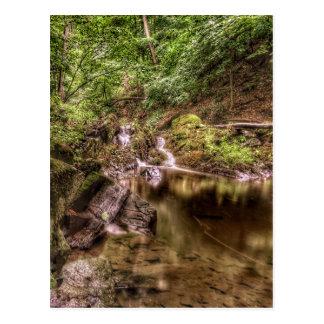 Neu-England Wildnis-Postkarte Postkarte
