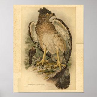 Neu-Guinea Harpy-Adler-Vogel-FarbVintager Druck Poster