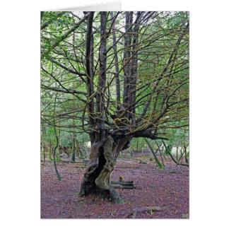 Neue Baum des Waldes KARTE