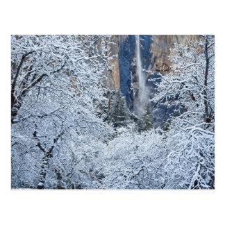 Neue Schneefälle in den Bäumen unter Bridalveil Postkarte