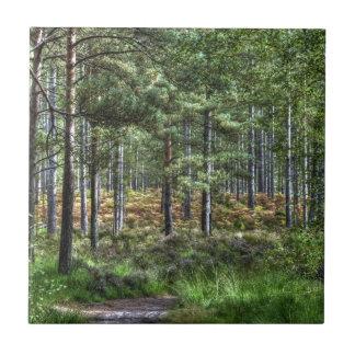 Neues Foto des WaldwaldlandHDR Fliese