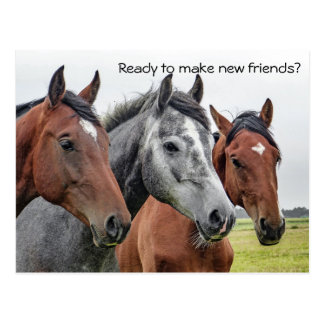 Neues Freund-Pferdewillkommen von der Postkarte