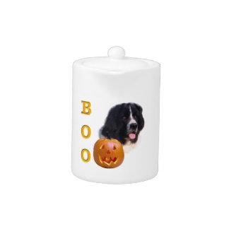 Neufundland Landseer Halloween Boo