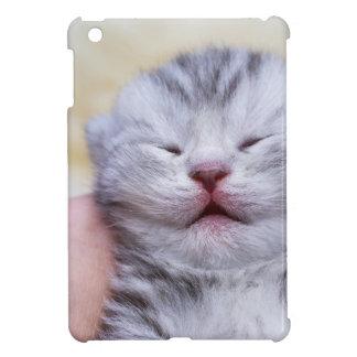 Neugeborene silberne Tabbyhauptkatze, die an Hand iPad Mini Hülle