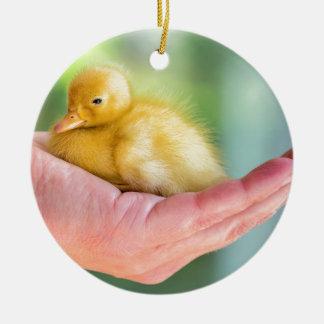 Neugeborenes gelbes Entlein, das an Hand sitzt Rundes Keramik Ornament