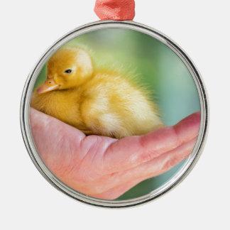 Neugeborenes gelbes Entlein, das an Hand sitzt Silbernes Ornament