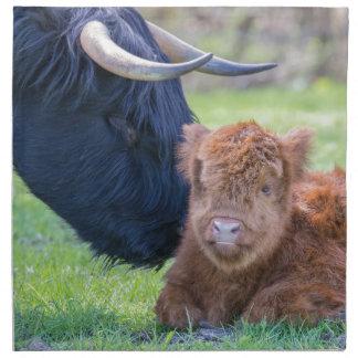 Neugeborenes schottisches Hochländerkalb mit Stoffserviette