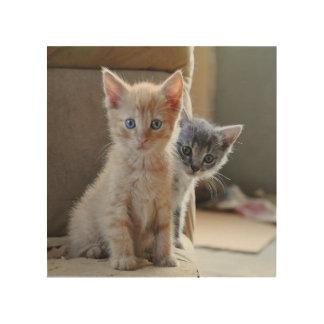 Neugierige Kätzchen Holzwanddeko