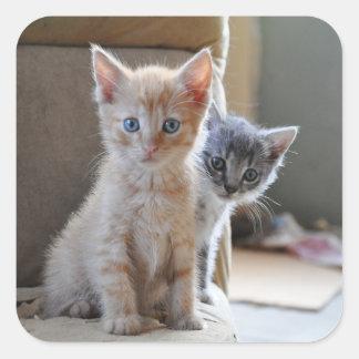 Neugierige Kätzchen Quadratischer Aufkleber