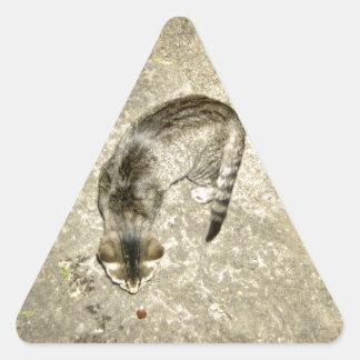 Neugierige Katze, die an der Eichel schnüffelt Dreieckiger Aufkleber