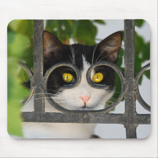 Neugierige Katze mit dem Schauspiel-Rahmen lustig Mousepad