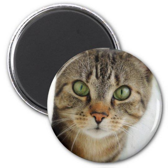 neugierige Katze Runder Magnet 5,7 Cm