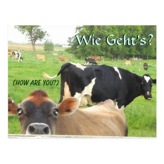 Neugierige Kuh-Postkarte. Addieren Sie Ihren Postkarten