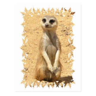 Neugierige Meerkat Postkarte