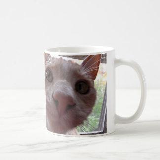 Neugierige Miezekatze Kaffeetasse